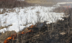 Snow and grass fire